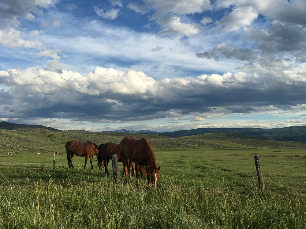 Collective Vail_Horses Grazing 2