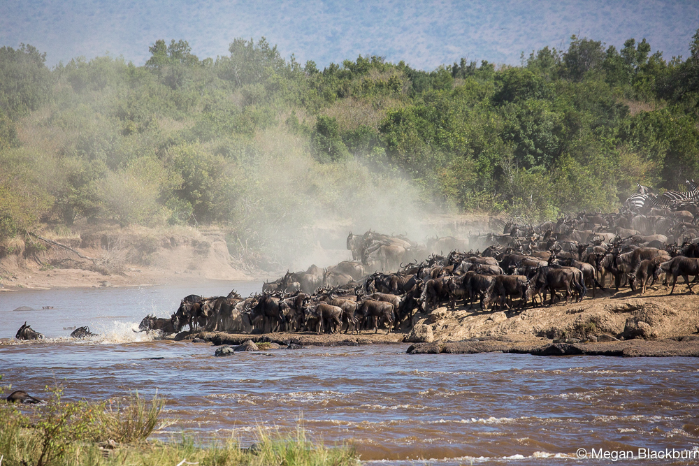 Masai Mara - Large Crossing 3