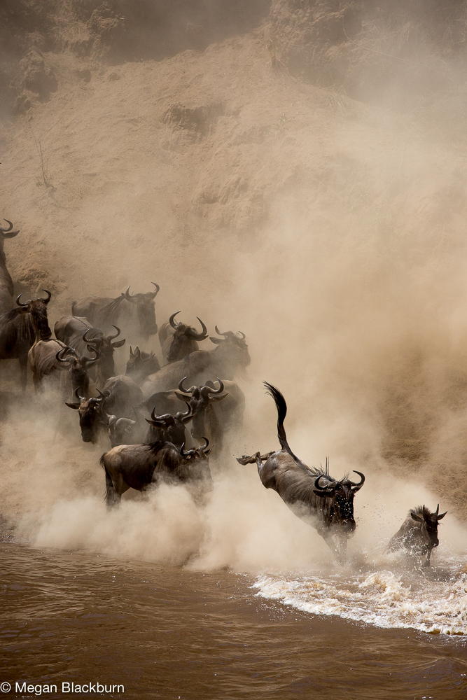 Serengeti - Large Crossing 1