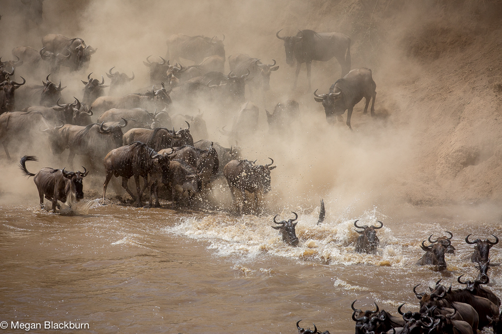 Serengeti - Large Crossing 2