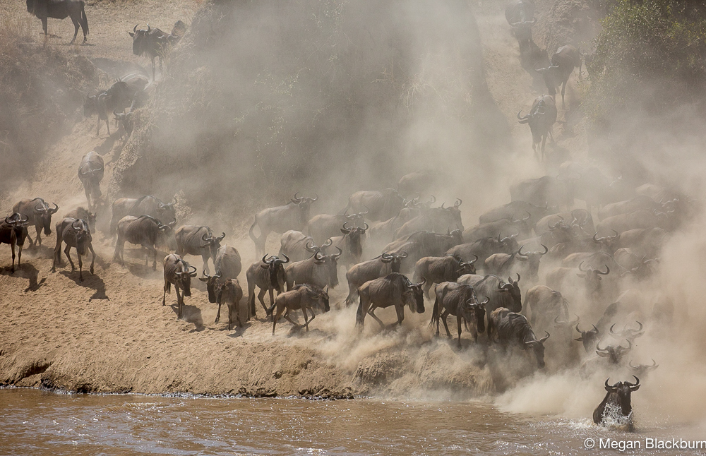 Serengeti - Large Crossing 4