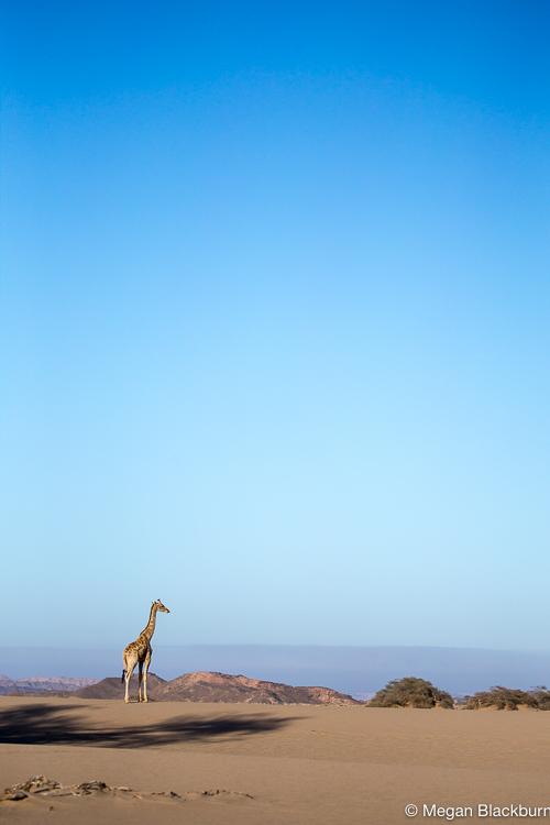 Hoanib Giraffee with Vista