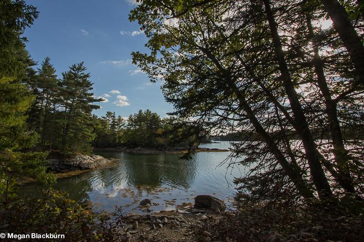 Maine Cove