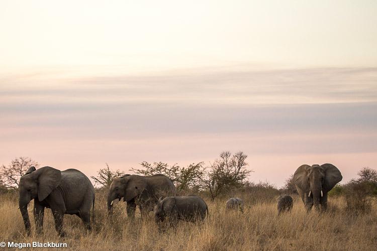 Photo Tips Elephants Landscape