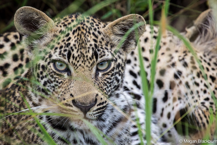 Photo Tips Leopard Cub