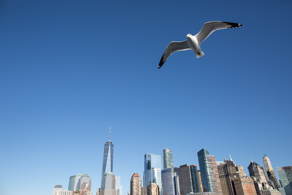 World Trade Center and a Seagull